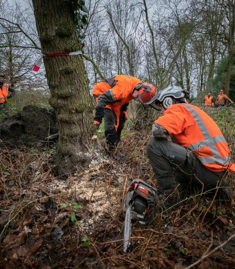 Studenten Helicon gaan bomen bij Kasteel Geldrop te lijf