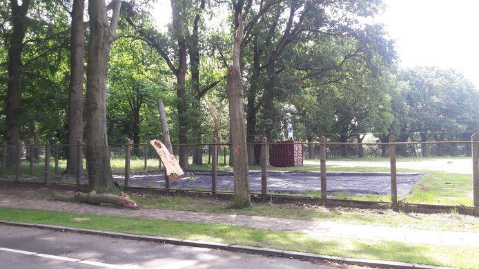 Het afgebroken deel van de boom blijft keurig op het hek van Sportpark Marialust hangen.