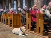 Honden gezegend bij kerkmis in Beckum