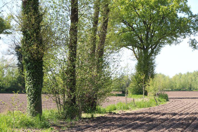 Herplant na kap op een wal tussen twee akkers tussen Eibergen en Neede.   Landbouworganisatie LTO vreest dat het planten van bomen in de knel komt, als voor elke te kappen boom vergunning moet worden aangevraagd.