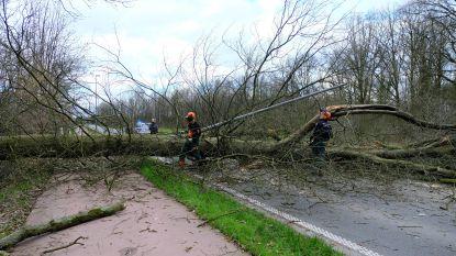 Storm raast over regio: daken afgerukt, bomen omgewaaid, wegen versperd, musical afgelast en één gewonde