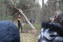 Paarden trekken een boom uit het bos.