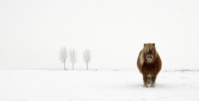 Met deze foto, getiteld The Cold Pony (2014) won Gert van den Bosch een Sony Award. Er waren bijna 140.000 inzendingen uit 166 landen.