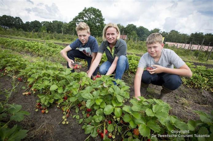 Nathalie Veldhuis plukt samen met haar twee zoons (Stan, links) en Aron gaan aardbeien bij 't Düvelshöfke.