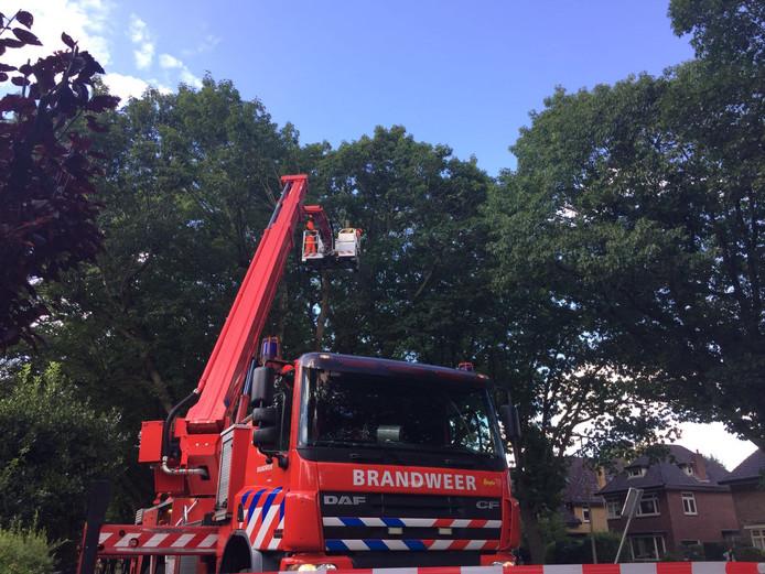 Bomen worden gekapt aan de Egbert ten Catelaan in Almelo