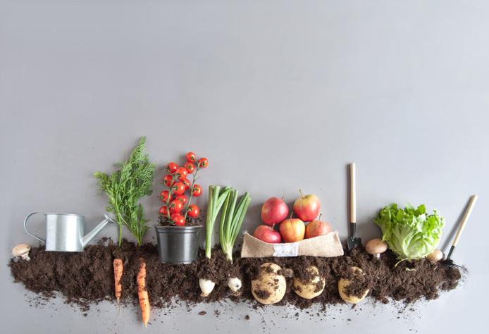 De productie van biologische voeding bereikt een record.