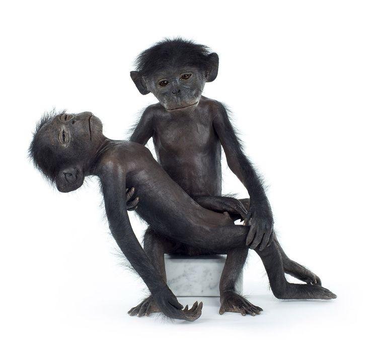 'La Pièta de Darwin', taxidermie en marmer. Beeld Strictua