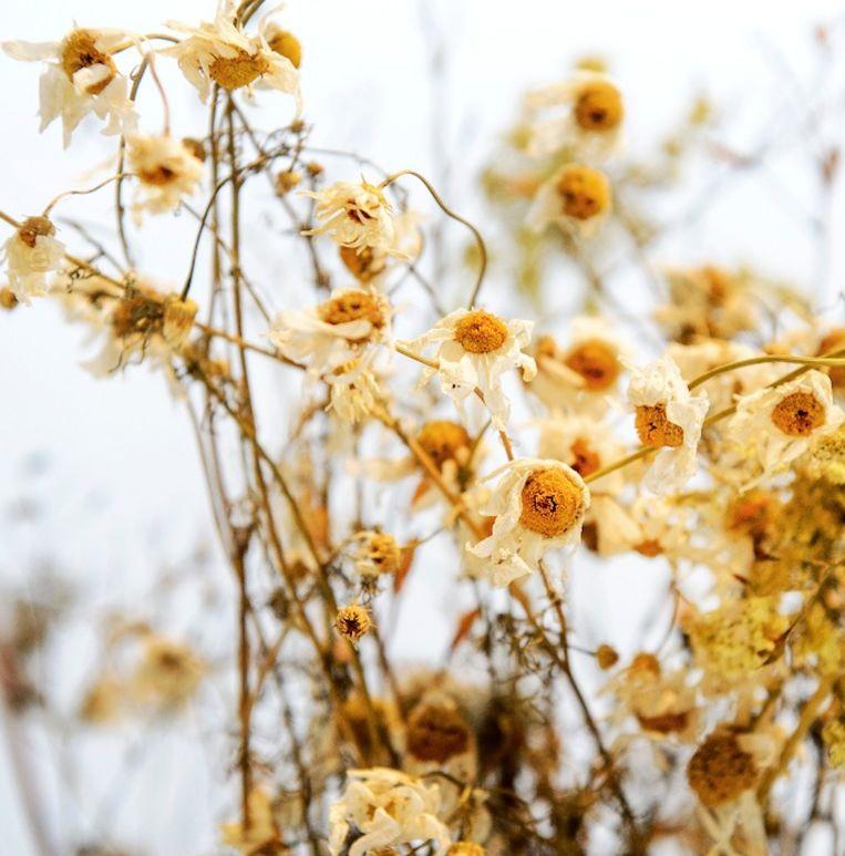 Bloemen van de rampplek Beeld ANP