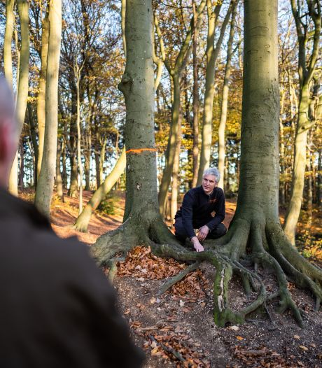 Arnhem kapt 800 bomen in Klarenbeek. Dunnen roept protesten op onder liefhebbers van park