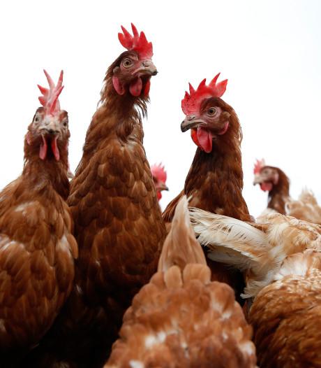 Buurvrouw van kippenboer in Geerdijk kan toch bezwaar maken