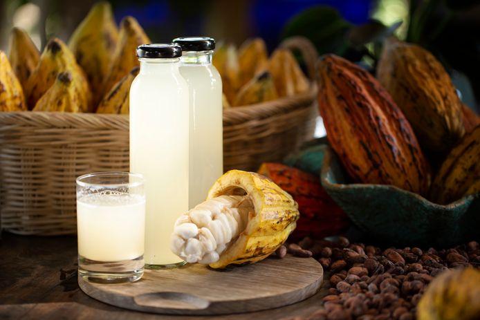 Sap van het vruchtvlees van de cacaovrucht.