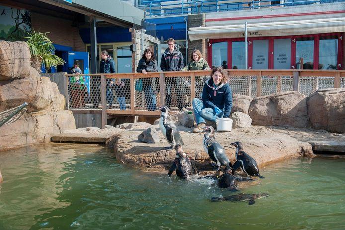 De pinguins in Sea Life.