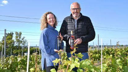 """Wijngoed Mikken levert eerste wijnen en  breidt drastisch uit: """"De eerste Roeselaarse wijn  is een feit!"""""""
