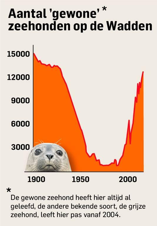 Zeehonden zijn weer massaal aanwezig in de Waddenzee na een aantal zware jaren.
