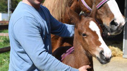 Pasgeboren veulen vernoemd naar Paul Severs