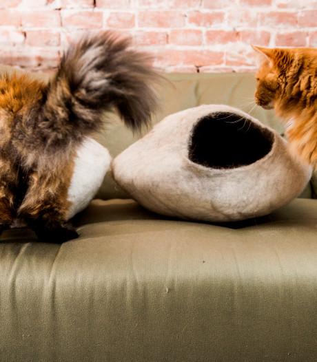 Kattenkenner Minky Spijkerman: 'Katteneigenaars Eindhoven moeten niet mauwen'