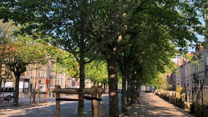 De eerste 65 van de 4.000 nieuwe bomen zitten in de grond
