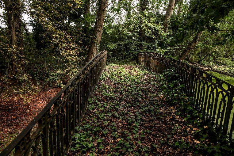 De natuur kon 30 jaar langjaren ongestoord haar gang gaan in het voormalige kasteelpark.
