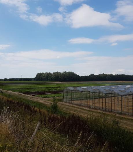 Rijk Zwaan sloopt en bouwt in Heijningen