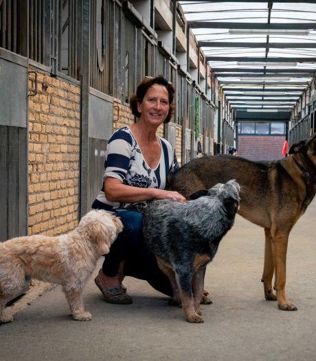 Honden gaan de paardenstallen van Thérèse vullen: 'We mikken op singles of tweeverdieners'