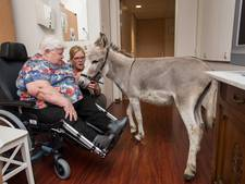 Ezels laten senioren lachen in zorginstelling Avoord