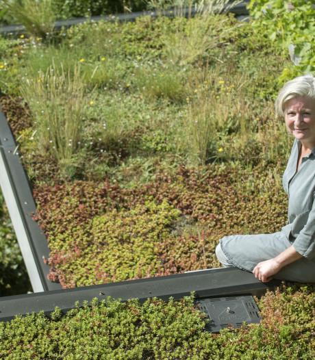 Provincie en Oversticht zetten in op 'natuurinclusief' bouwen met ruim baan voor vleermuis en zwaluw
