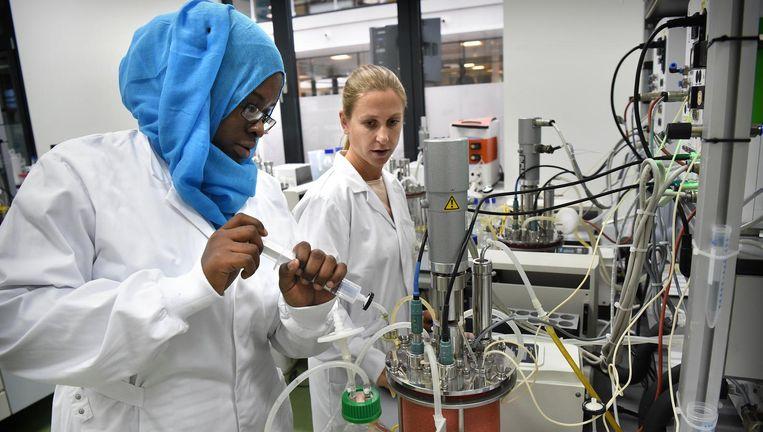 Een laboratorium bij Koppert, gespecialiseerd in biologische gewasbescherming, onder meer met insecten Beeld Marcel van den Bergh / de Volkskrant