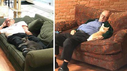 Vertedering alom: 75-jarige vrijwilliger komt elke dag naar asiel en doet er dutjes met de katten