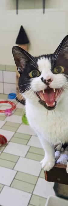 Dierenasiel Hokazo weer open na 'operatie muizenplaag'