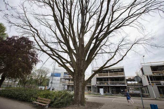 De boom in het Stadswandelpark heeft zijn blaadjes niet meer teruggekregen.