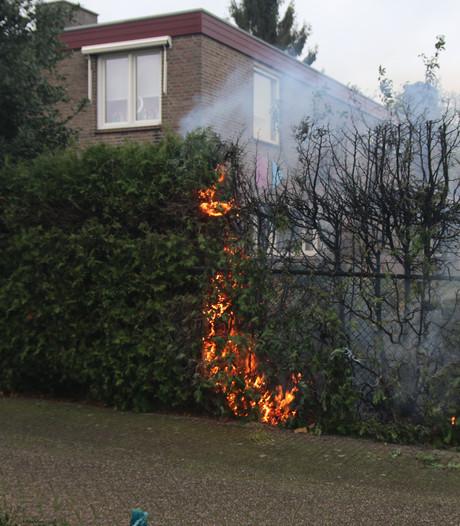 Coniferenhaag vliegt in brand in Boxmeer