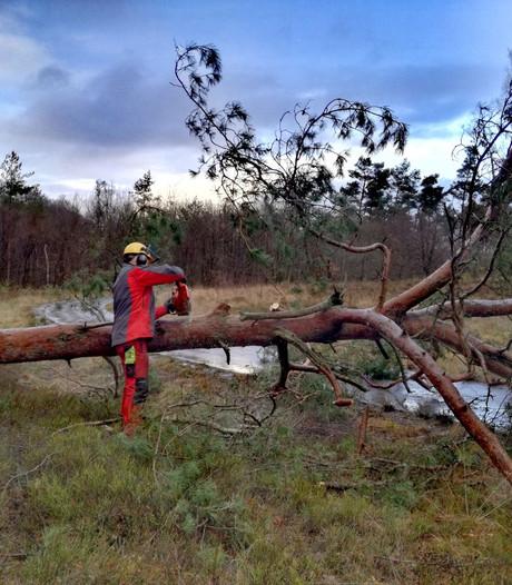 Hoge Veluwe weer open na zware storm