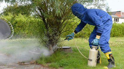 Brandweer krijgt 150 oproepen voor wespenverdelging op één dag