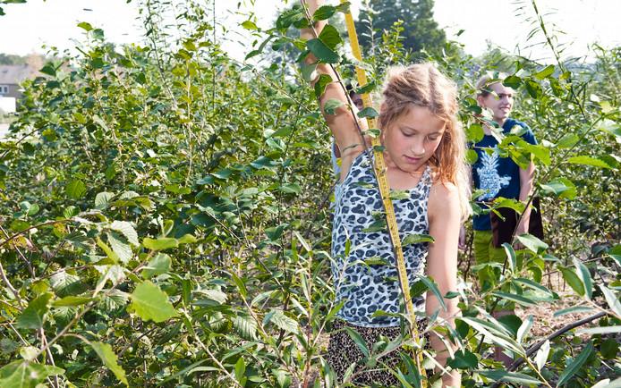 Kinderen kunnen in het minibos ook zelf bijhouden hoe hard de bomen en struiken groeien.