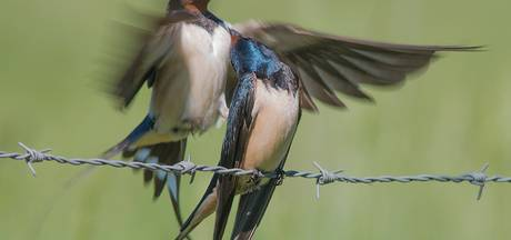 Lopikerwaard schiet erfvogels te hulp