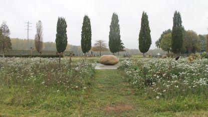 Sp.a-Groen pleit voor inrichten van natuurbegraafplaats in Arendonk