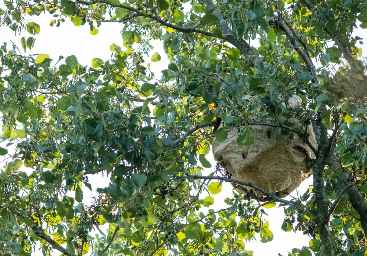 Het nest in Veenendaal.