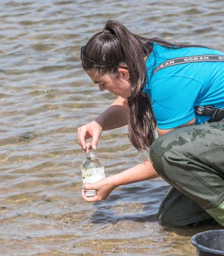Negatief zwemadvies: bacterie in water Biddinghuizen