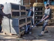 Dakloze dierenopvang Flappus heeft 'eindelijk' vaste stek in Zwolle