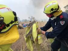 Is na bosbranden het einde nabij voor de koala's?