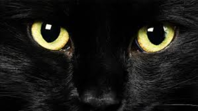De indringende blik van een zwarte kat.