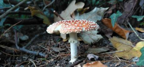 Opvallende paddenstoel gezien in de buurt? Laat het ons weten
