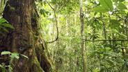 Wereldrecord bomen planten: 35.000 vrijwilligers planten samen 350.000 zaadjes