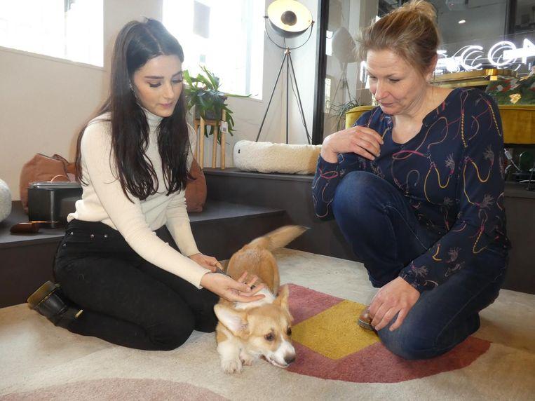 Content creator Josie Boog met corgi Brioche, de kleine stoorzender, en hondenmasseuse Natascha Doze Beeld Schuim
