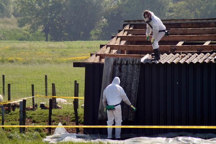 Golfplaten met asbest worden verwijderd van een schuur.