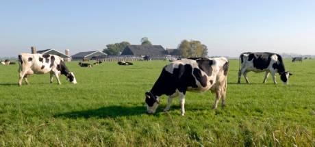 Beetje meer vrijheid voor Brabantse boer