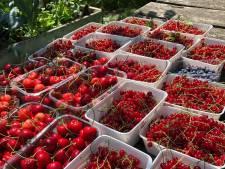 Udenfonds steunt nieuwe plantactie 'de eetbare tuin'