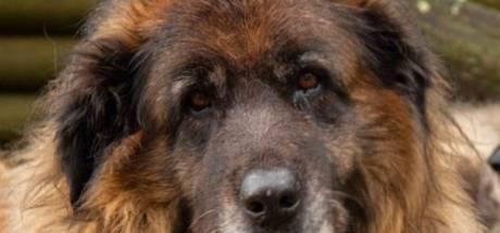 Alleen een harteloze hufter zegt na deze week 'nee' tegen de Dierenbescherming