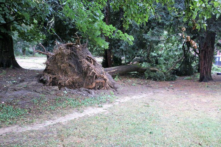 In het Albertpark in Halle waaide deze grote boom om.