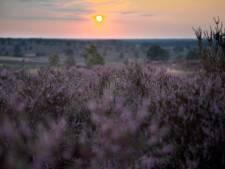 Provincie stelt boeren gerust: geen uitbreiding natuur Sallandse Heuvelrug